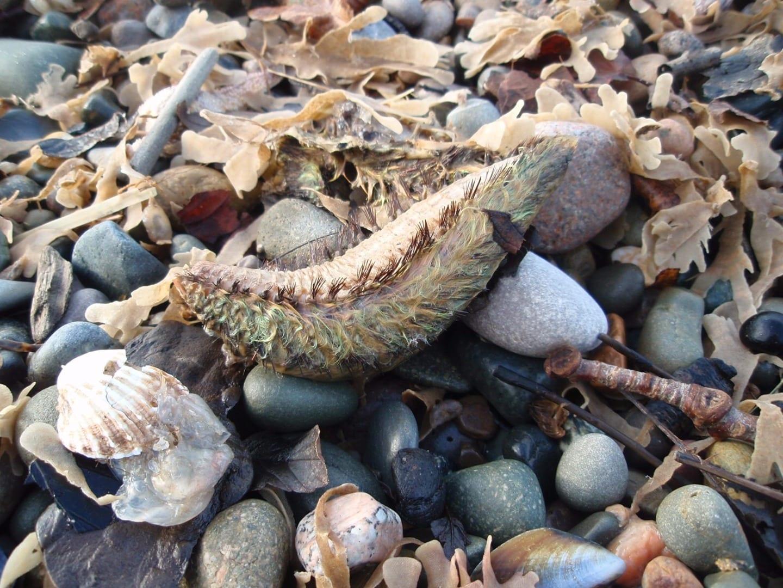 Marine Biology Rossall Beach Group