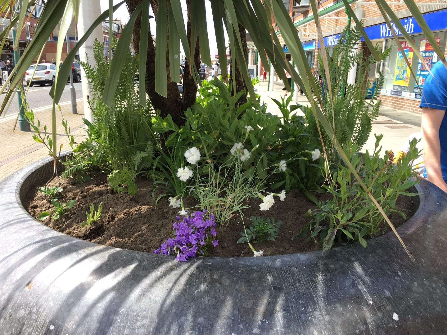 Grey pots in the town centre, planted up. Cleveleys Coastal Community Team updates