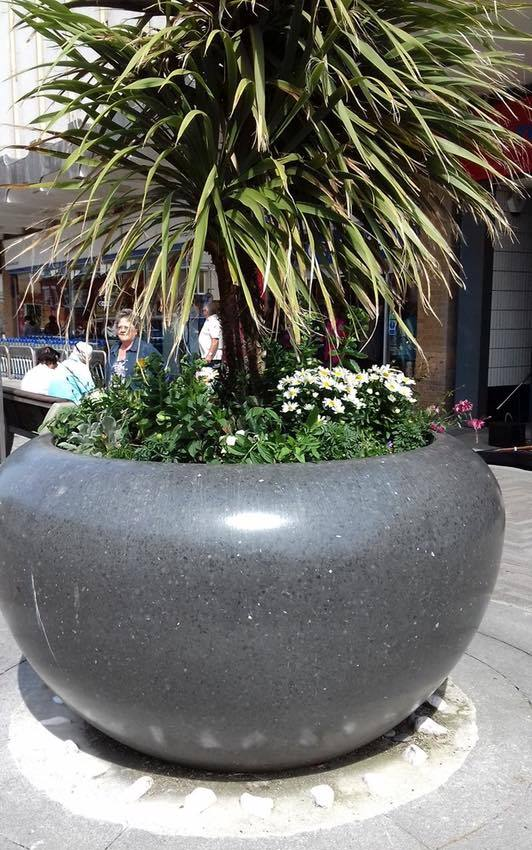 Plants in the grey pots in Cleveleys town centre. Cleveleys Coastal Community Team updates